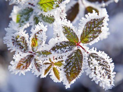 piante-inverno-1024x773
