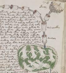 Il libro più misterioso della storia: il manoscritto di Voynich, ora consultabile online