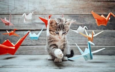 L'assurance des chiens, chats et autres animaux de compagnie
