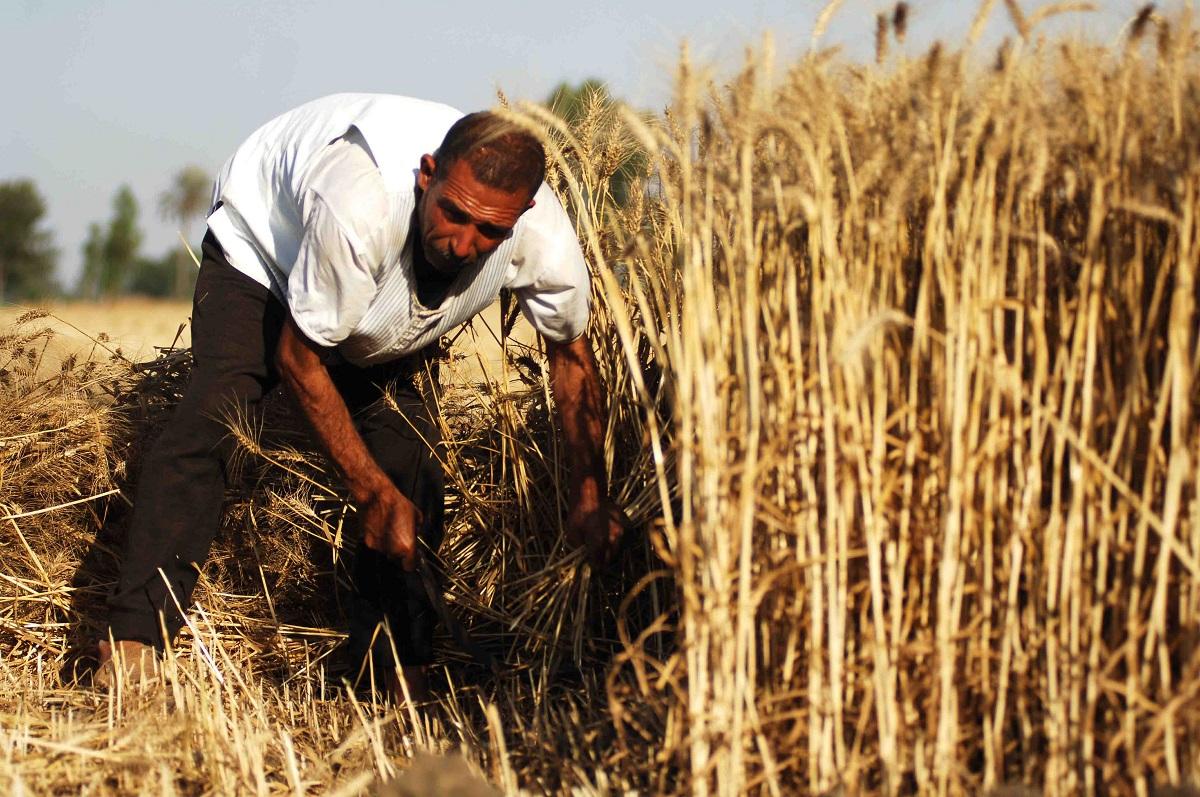 المغرب: تعزيز الأمن الغذائي بواسطة الزراعة هو المفتاح للأمن الإجتماعي