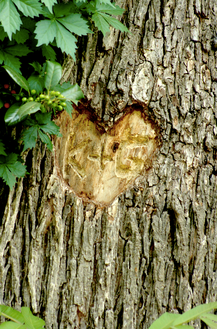 carved initials in tree