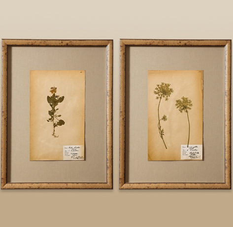 antique botanicals
