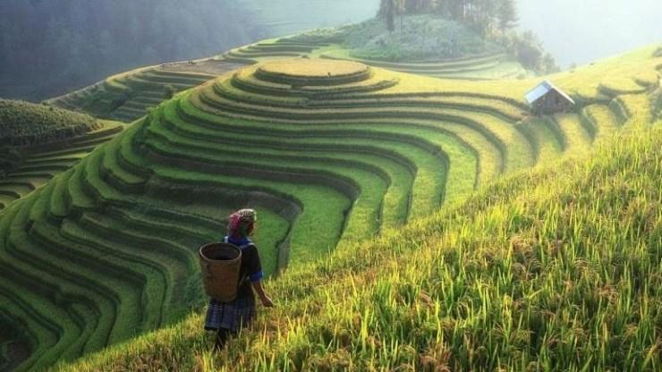 Κατά 40 φορές αυξήθηκε το κατά κεφαλήν εισόδημα στην Κίνα στις αγροτικές περιοχές