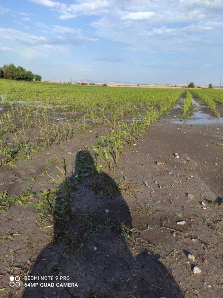 Λάρισα: Τεράστια καταστροφή από συνεχόμενες χαλαζοπτώσεις στον Κραννώνα - Ζημιές σε τουλάχιστον 2.000 στρέμματα (φωτό - βίντεο)