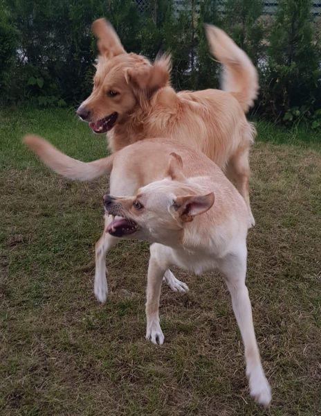Bonzo og Oliver