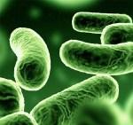 Bacteriën ontdekt die in de stratosfeer leven