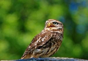owl-275940_1920(1)