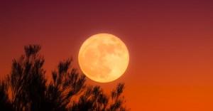 Moonprints von Dana Gerhardt-image