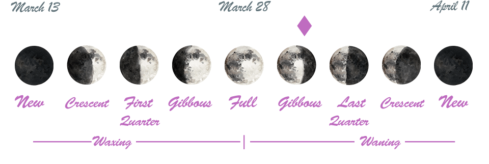 Lunar phases on a time line