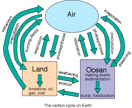 The carbon cycle on Earth