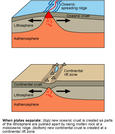 separating plates create midocean ridges and continental rift zones