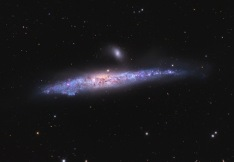 The Whale Galaxy