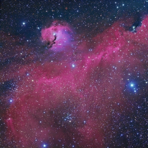 Seagull or Parrot's Head Nebula