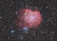 Kees Scherer - MonkeyHead NGC 2174