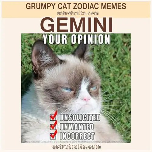 Gemini Zodiac Sign Meme - Grumpy Cat