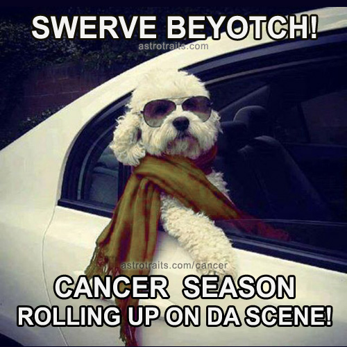 swerve cancer season rolling up on the scene dog meme