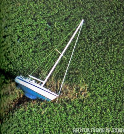 Barco encallado entre la vegetación