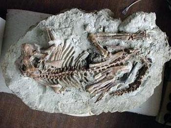 Fósil del Mesozoico