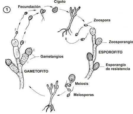 Características generales de los hongos.