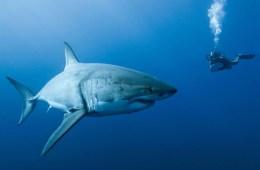 Lucha de Gigantes: Banco Tiburón vs Consumidor