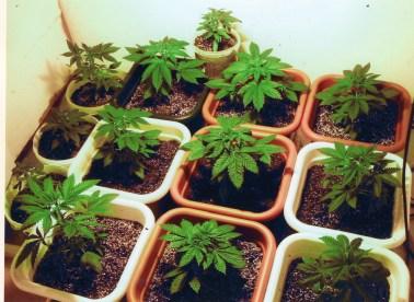 Indoor Growing Tips