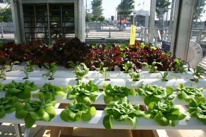 Indoor Vegetable Garden