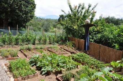Veggies that Thrive in the Winter Months