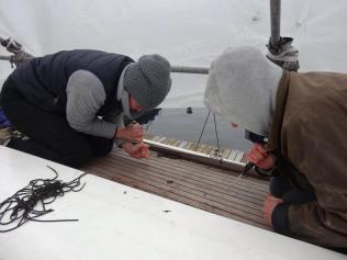 Neue Fugen Teakdeck Walross