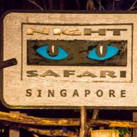 Singapore Night Safari: Is It Worth It?
