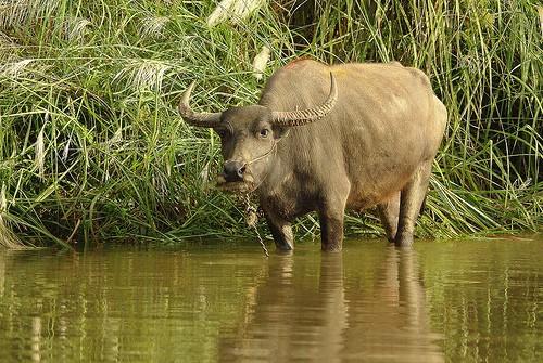 Rwanda Safari Holiday