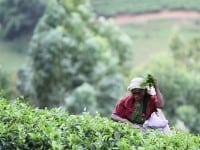 Sri Lanka Asian Escapes to Sample