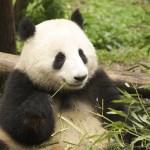 ChinaEnchanting Landscape and Wildlife