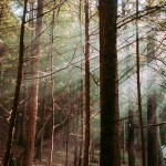 [Wooded forest]