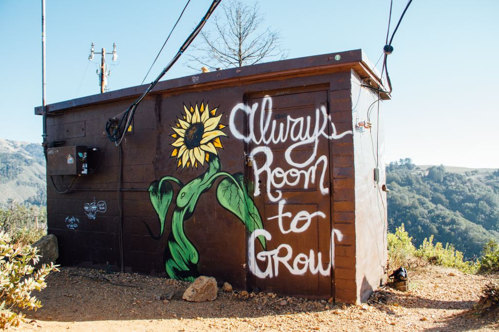 "Image showing graffiti of a sunflower captioned ""always room to grow"""
