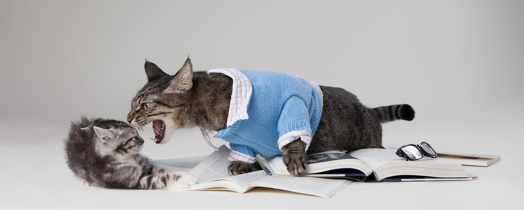 A large cat dressed in a collared shirt and sweater sitting on a pile of books and acting aggressively toward a kitten