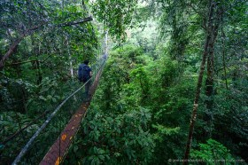 Mulu canopy walk gives a unique view of the rain forest at tree top level, Mulu National Park Borneo
