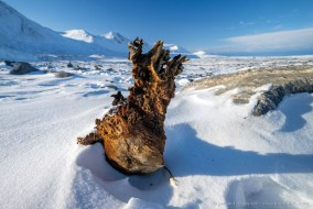 A mummified seal in the McMurdo Dry Valleys in Antarctica