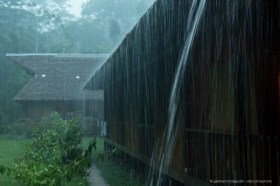 Water running off a traditional roof during heavy tropical rainfall at Tambopata Research Center