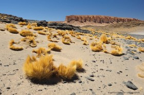 Cliffs and Puna grass (paja brava) at Salar de Tara, Atacama Chile