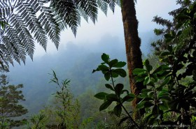 Fog in the dense Valdivian temperate Rainforest, Parque Oncol Chile