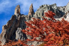 The colors of autumn. Red Lenga leaves in front of impressive rock castles. Cerro Castillo National Park