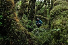 Exploring the amazing temperate rainforest of Isla Madre de Dios in Patagonia. Extreme rainfall cause the growth of thick moss covers