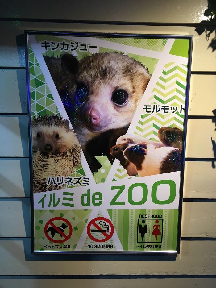 granillumi_de_zoo