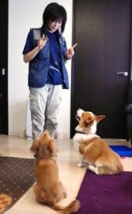 dogtraining (6)