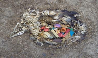Bird With Plastic - Stop Using Plastic