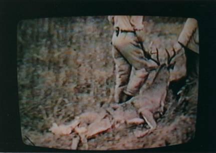 Deer B image002
