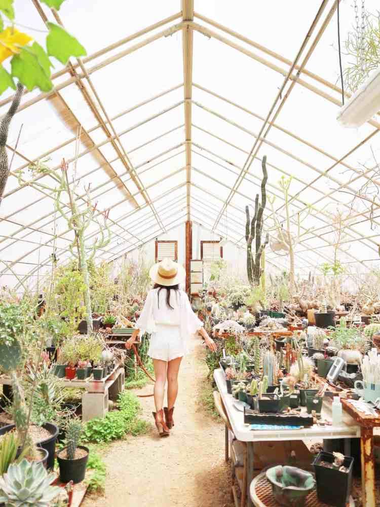 Succulentia