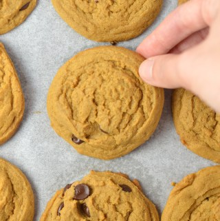 Simple Molasses Chocolate Chip Cookies make the perfect snack or dessert. Such a quick and easy recipe, it will become your new favourite.