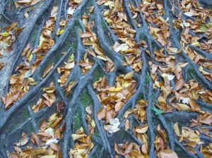 Leaves in roots.