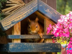 squirrel-826709_1920-800x600